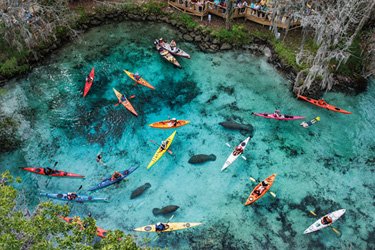 Kayak With Manatees in Crystal River