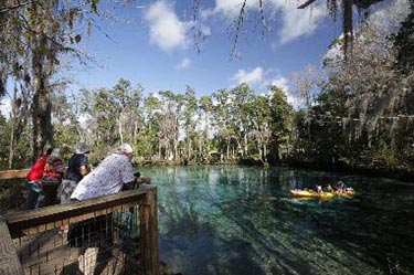 See Manatees at Three Sisters Springs Boardwalk